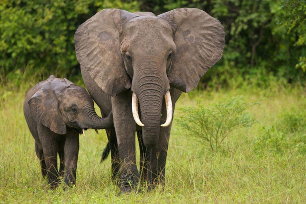 Image source: https://www.google.ro/search?biw=1920&bih=925&tbm=isch&sa=1&ei=XKGlWqqxJ-uU6ATQt4ToDg&q=elephants&oq=elephants&gs_l=psy-ab.3..0l4j0i30k1l6.138525.140278.0.140437.11.8.1.2.2.0.129.771.2j5.7.0....0...1c.1.64.psy-ab..1.10.793...0i67k1j0i10i19k1.0._r1kRU36HQE#imgrc=GojLGlXvtpQz6M: