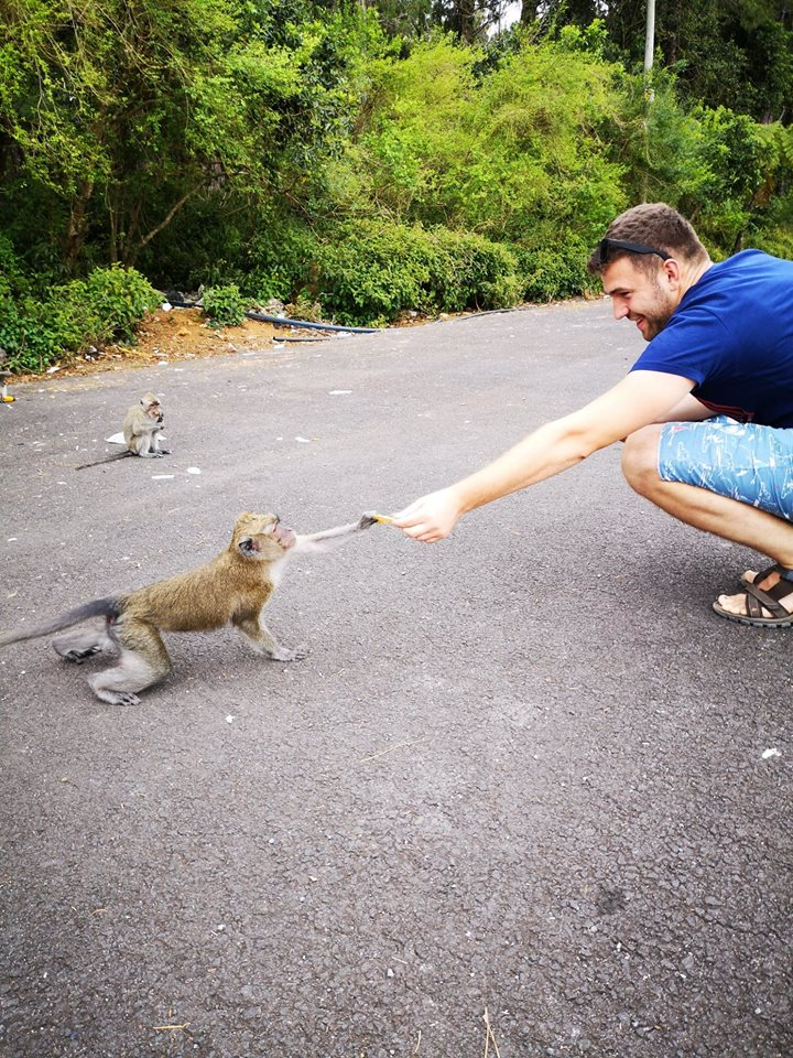 maimuta grand bassin mauritius monkey parcare